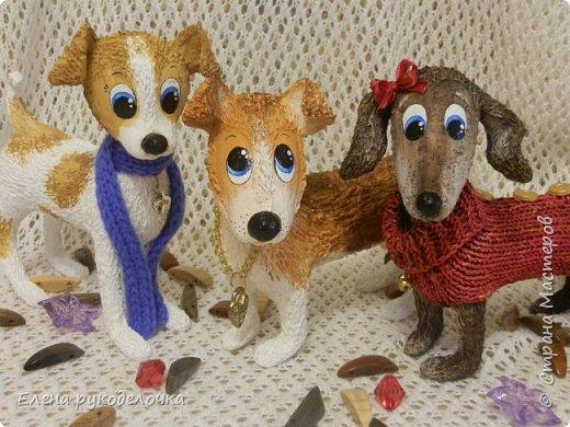Появился у меня на свет ещё один собак неизвестной породы. Откликается на имя ЛАКИ. Очень милый и озорной парнишка.  Прошу любить и жаловать! фото 8