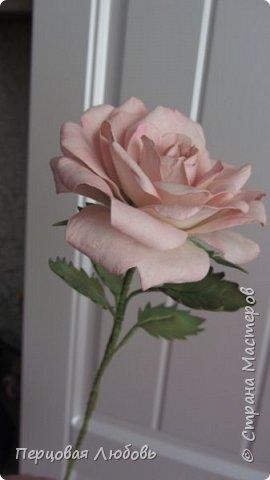 Здравствуйте друзья! Сегодня я вам представляю цветок из иранского фоамирана, это роза в нежных тонах. Я и в жизни люблю именно в пастельных оттенках. Очень полюбила этот материал, работать с ним одно удовольствие!  Лепестки теснила на молде, листья тоже.  фото 1