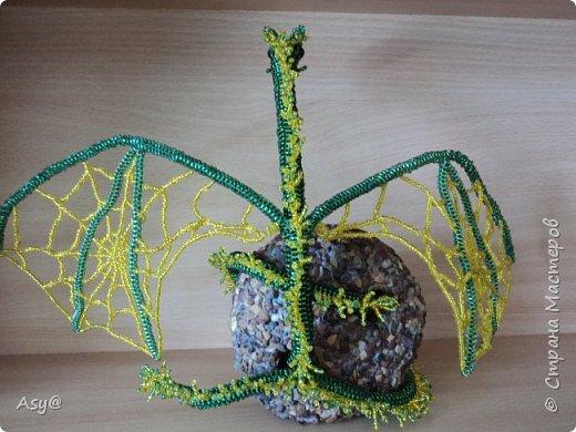 Дракон-паутиник  фото 5