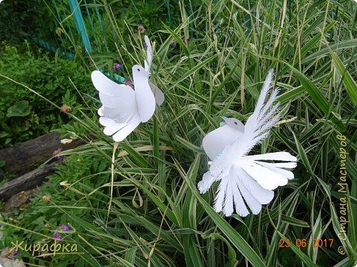 Летите, голуби, летите.... фото 5