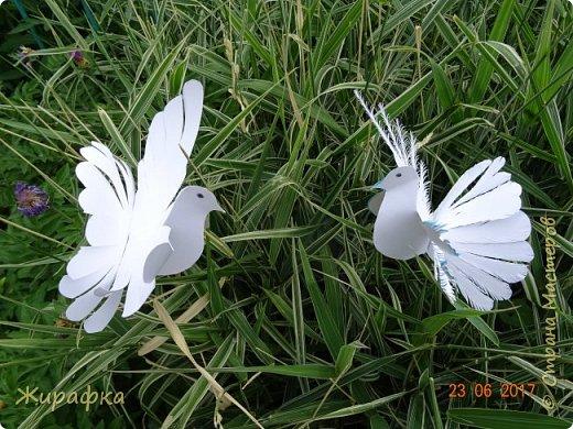 Летите, голуби, летите.... фото 1