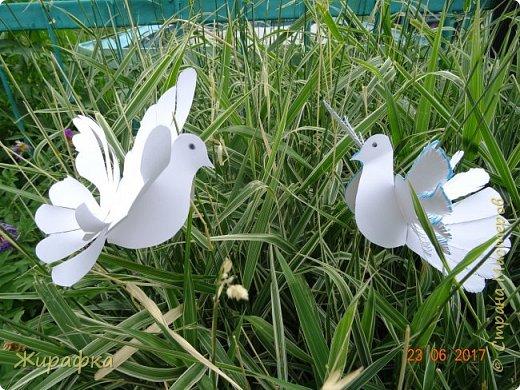 Летите, голуби, летите.... фото 6