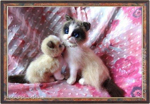 Мама кошка с котенком фото 2