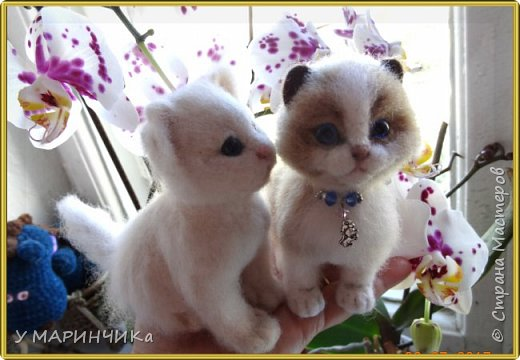 Мама кошка с котенком фото 3