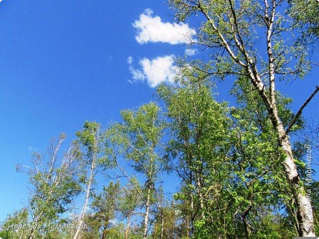 По дороге в Горно-Алтайск мы ездим очень часто, все уже должно бы примелькаться, но нет! Этой красотой налюбоваться невозможно. фото 19