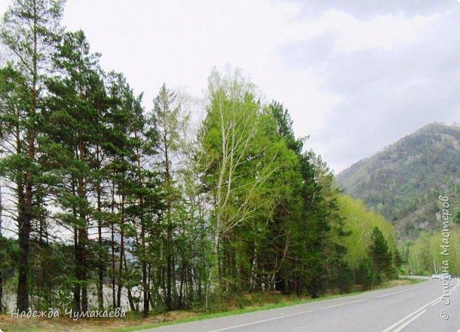 По дороге в Горно-Алтайск мы ездим очень часто, все уже должно бы примелькаться, но нет! Этой красотой налюбоваться невозможно. фото 2