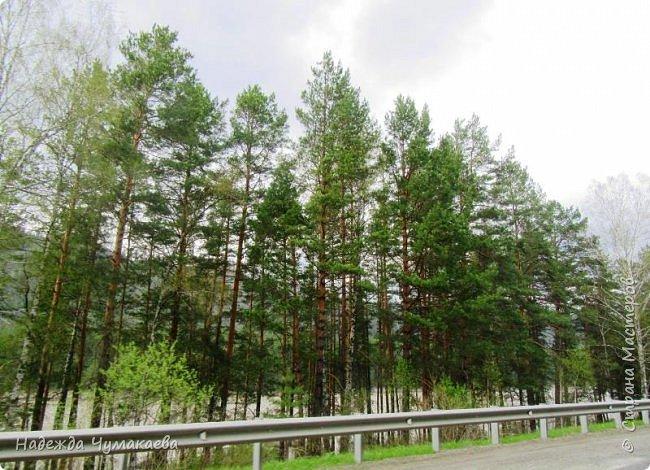 По дороге в Горно-Алтайск мы ездим очень часто, все уже должно бы примелькаться, но нет! Этой красотой налюбоваться невозможно. фото 4
