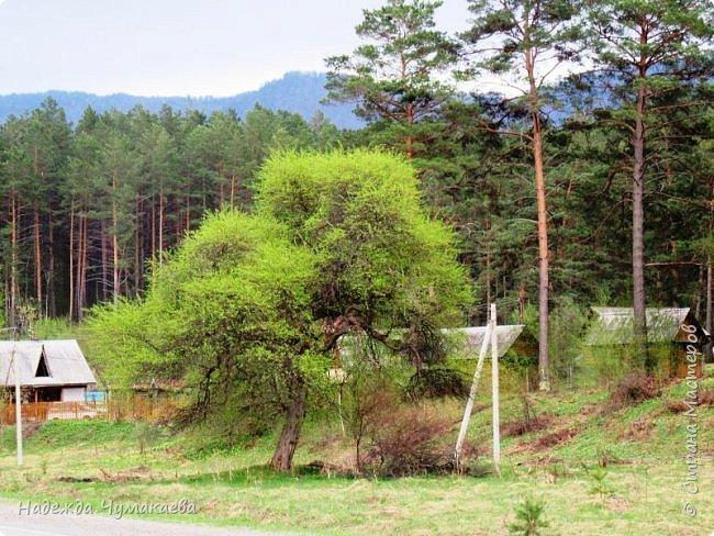 По дороге в Горно-Алтайск мы ездим очень часто, все уже должно бы примелькаться, но нет! Этой красотой налюбоваться невозможно. фото 5
