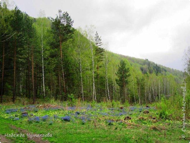 По дороге в Горно-Алтайск мы ездим очень часто, все уже должно бы примелькаться, но нет! Этой красотой налюбоваться невозможно. фото 8