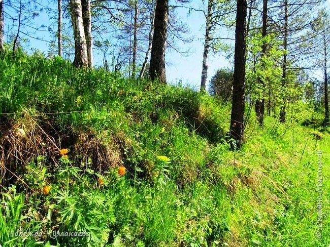 По дороге в Горно-Алтайск мы ездим очень часто, все уже должно бы примелькаться, но нет! Этой красотой налюбоваться невозможно. фото 28