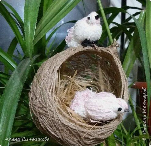 Гнездо с птичками фото 1