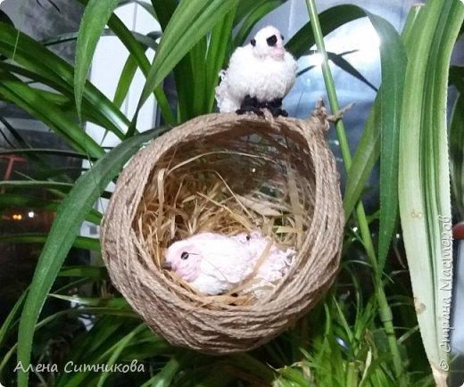 Гнездо с птичками фото 3