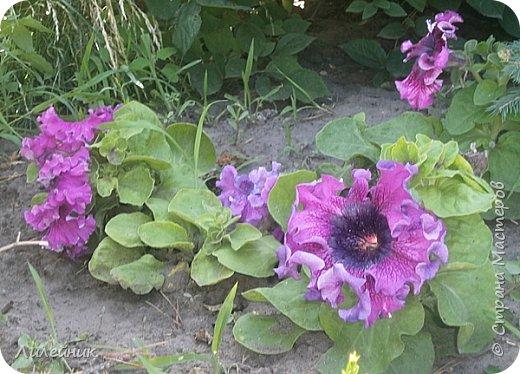 Лето. Солнечно-цветочное утро фото 12