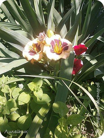 Лето. Солнечно-цветочное утро фото 15