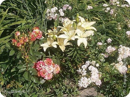Лето. Солнечно-цветочное утро фото 16