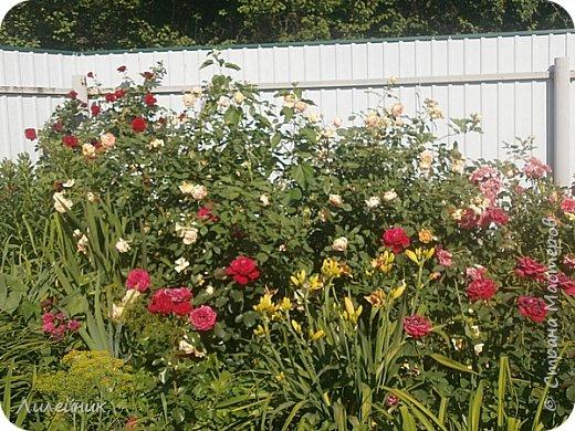 Лето. Солнечно-цветочное утро фото 17