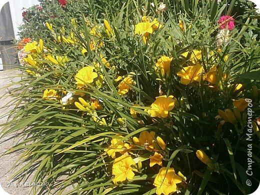 Лето. Солнечно-цветочное утро фото 18