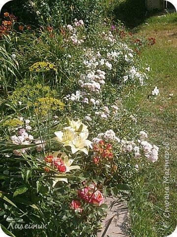 Лето. Солнечно-цветочное утро фото 20