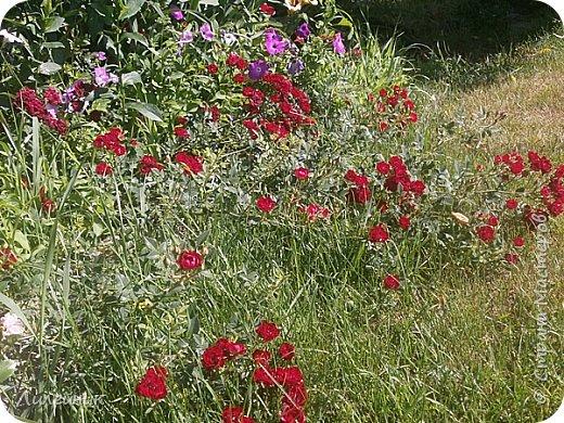 Лето. Солнечно-цветочное утро фото 22
