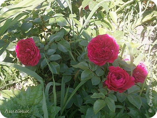 Лето. Солнечно-цветочное утро фото 23