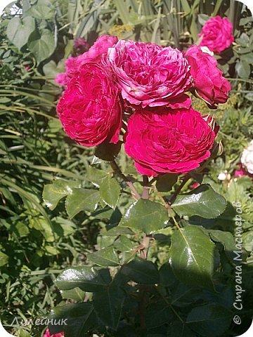 Лето. Солнечно-цветочное утро фото 24
