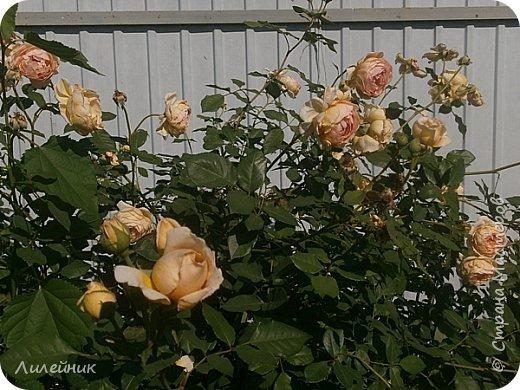 Лето. Солнечно-цветочное утро фото 25