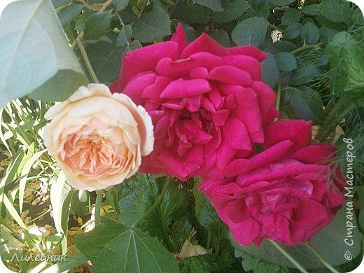 Лето. Солнечно-цветочное утро фото 26