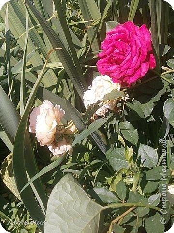 Лето. Солнечно-цветочное утро фото 27