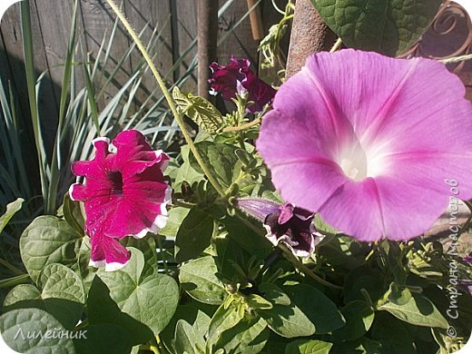 Лето. Солнечно-цветочное утро фото 28