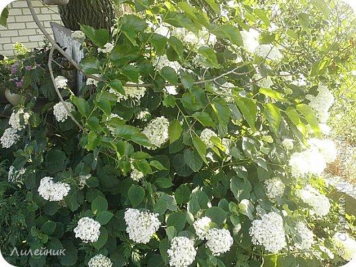 Лето. Солнечно-цветочное утро фото 29