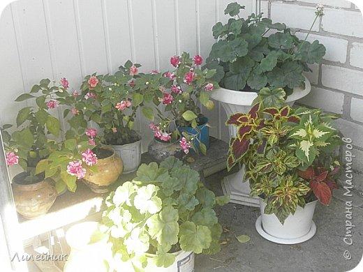 Лето. Солнечно-цветочное утро фото 30