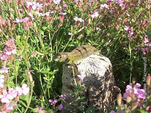Всем моим полуночным гостям ещё несколько картинок из жизни  моих ящерок. Те, кто смотрел первые серии, уже знакомы с этой егозой, которая народилась  этой весной. фото 27