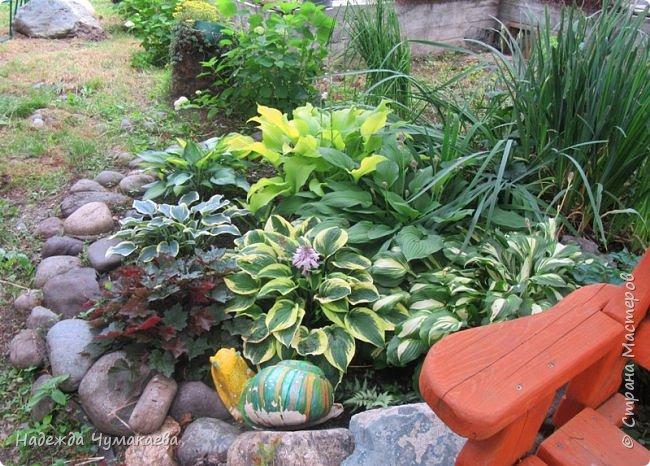 В каждом тенистом уголке моего сада растут хосты, они практически вытеснили все остальные цветы, которых раньше было великое множество. фото 2