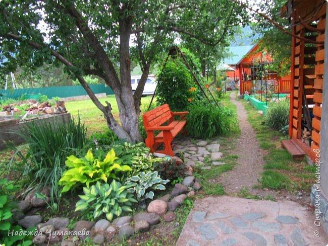 В каждом тенистом уголке моего сада растут хосты, они практически вытеснили все остальные цветы, которых раньше было великое множество. фото 1