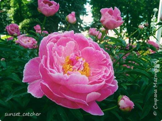 Цветы нравятся всем девочкам :) Ну или по крайней мере многим. Вот и у меня уже подобралась коллекция весна-лето, главный спонсор которой - 10k шагов в день :) Иногда в такие места заносит, что только успевай фотографировать!  фото 15