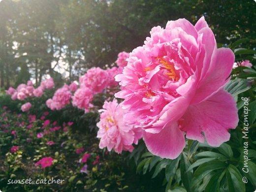 Цветы нравятся всем девочкам :) Ну или по крайней мере многим. Вот и у меня уже подобралась коллекция весна-лето, главный спонсор которой - 10k шагов в день :) Иногда в такие места заносит, что только успевай фотографировать!  фото 14