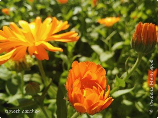 Цветы нравятся всем девочкам :) Ну или по крайней мере многим. Вот и у меня уже подобралась коллекция весна-лето, главный спонсор которой - 10k шагов в день :) Иногда в такие места заносит, что только успевай фотографировать!  фото 19