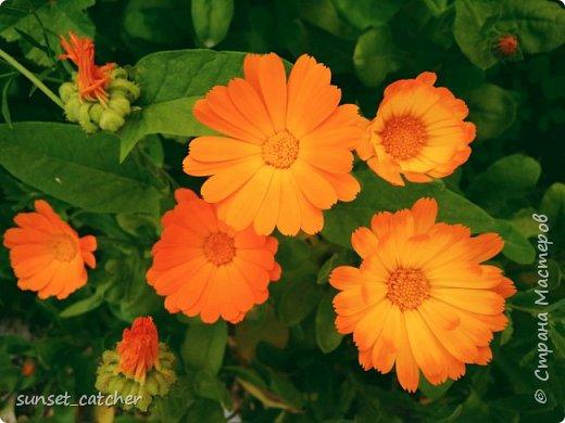 Цветы нравятся всем девочкам :) Ну или по крайней мере многим. Вот и у меня уже подобралась коллекция весна-лето, главный спонсор которой - 10k шагов в день :) Иногда в такие места заносит, что только успевай фотографировать!  фото 18