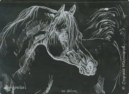 Лошадка. фото 1