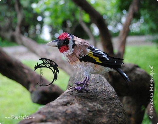 Сестренка попросила ей тоже птичку сделать. Ну что ж, почему бы и нет?) Поискали-поискали, нашли черноголового щегла... Ну и вот, сделала:) фото 11