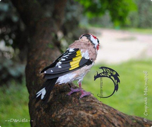 Сестренка попросила ей тоже птичку сделать. Ну что ж, почему бы и нет?) Поискали-поискали, нашли черноголового щегла... Ну и вот, сделала:) фото 7