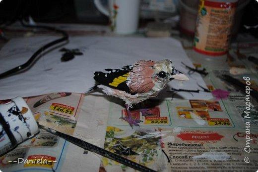 Сестренка попросила ей тоже птичку сделать. Ну что ж, почему бы и нет?) Поискали-поискали, нашли черноголового щегла... Ну и вот, сделала:) фото 17