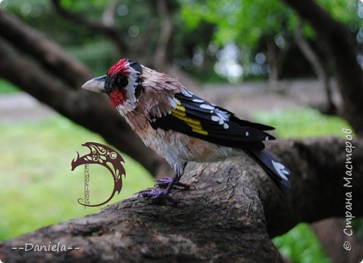 Сестренка попросила ей тоже птичку сделать. Ну что ж, почему бы и нет?) Поискали-поискали, нашли черноголового щегла... Ну и вот, сделала:) фото 6