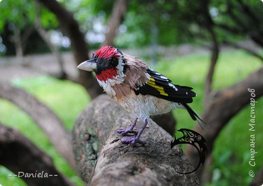 Сестренка попросила ей тоже птичку сделать. Ну что ж, почему бы и нет?) Поискали-поискали, нашли черноголового щегла... Ну и вот, сделала:) фото 8