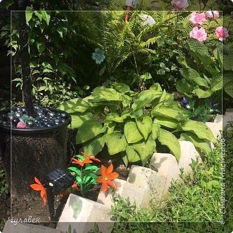 Вот такие цветочки сотворились у меня из пластиковых бутылок  фото 6