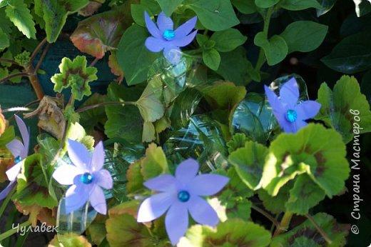 Вот такие цветочки сотворились у меня из пластиковых бутылок  фото 8