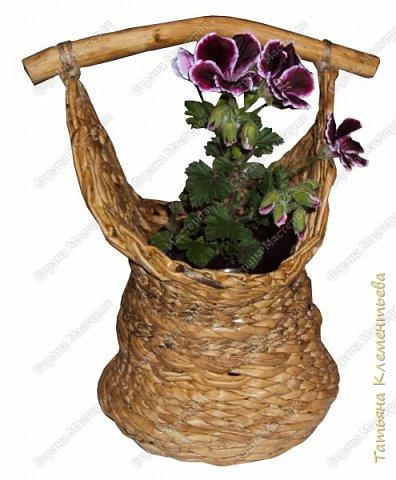 Яблоневых ручек для плетёных корзин заготовила много. Прижилась английская герань в маленьких баночках и назрела необходимость сплести ещё корзину. Корзина защищает баночку, а значит и корни растения от перегревания на солнце. Дно плету на основе сотового поликарбоната, который остался от постройки теплицы. Как плести такое дно можно посмотреть здесь  http://stranamasterov.ru/node/596573  фото 5