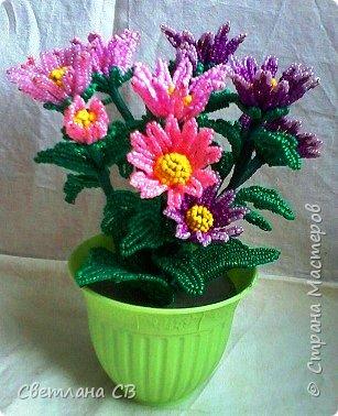 Хризантема кустовая фото 4