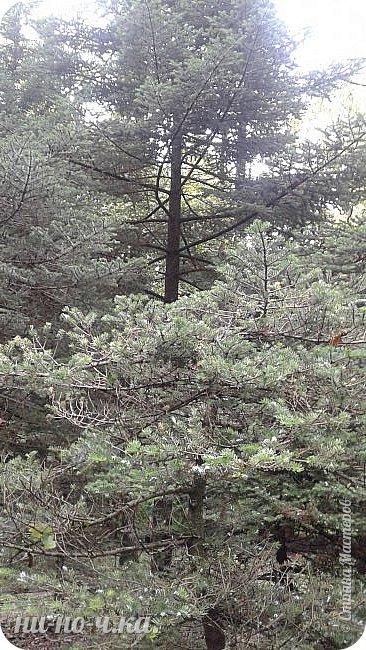 Здравствуйте!!! Сегодня я предлагаю вам совершить со мной прогулку по Ботаническому саду. фото 1