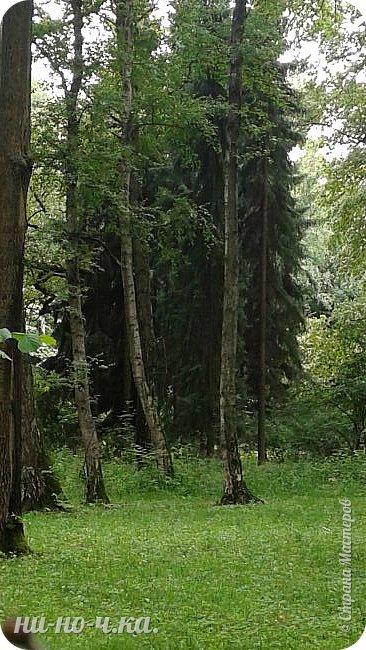 Здравствуйте!!! Сегодня я предлагаю вам совершить со мной прогулку по Ботаническому саду. фото 4